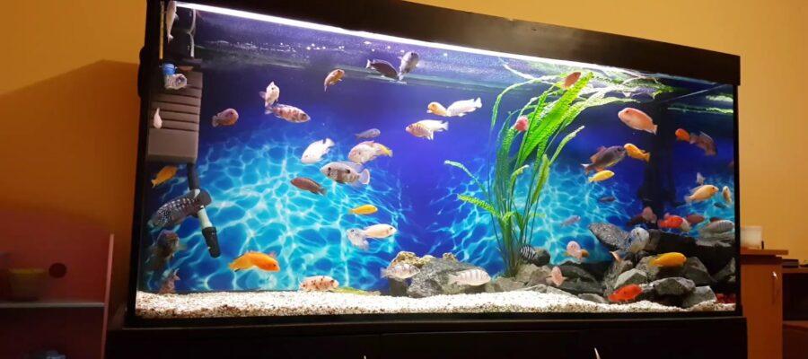 аквариум на заказ
